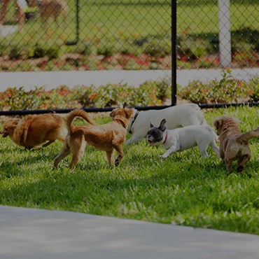 Large Dog Park at Meadows at American Fork Apartments